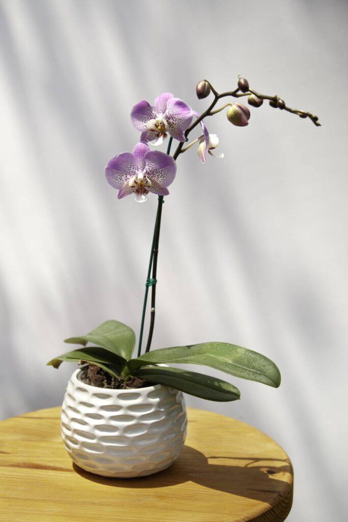 orquideas_4